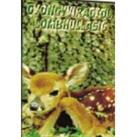 Gyöngyvirágtól lombhullásig (DVD)